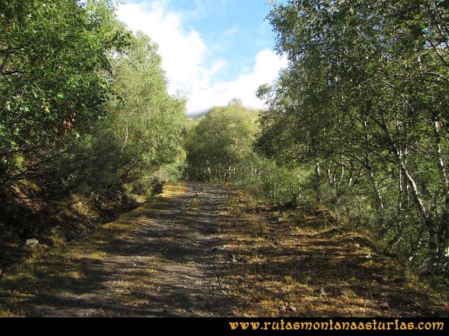 Ruta Pico Cellón: Camino entre árboles por el valle de los Pozos