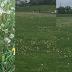 """Діти готують поле, кульбаби та... фекалії - про матч """"Тепловика-ДЮСШ-3"""" в Городенці (ВІДЕО)"""