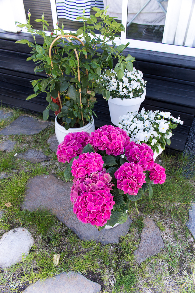 terassi, hortensia, piha ja puutarha