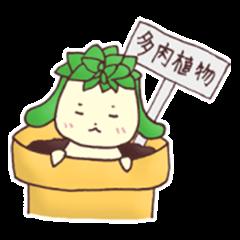 Succulent plant Taniku-chan!