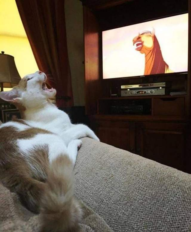 Funny cats - part 310, funny cat pictures, best cute cat images