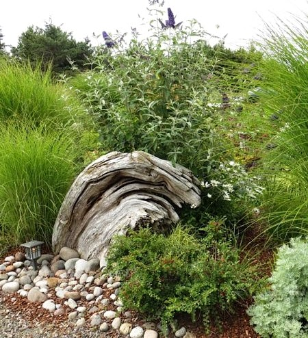 driftwood nature sculpture in garden