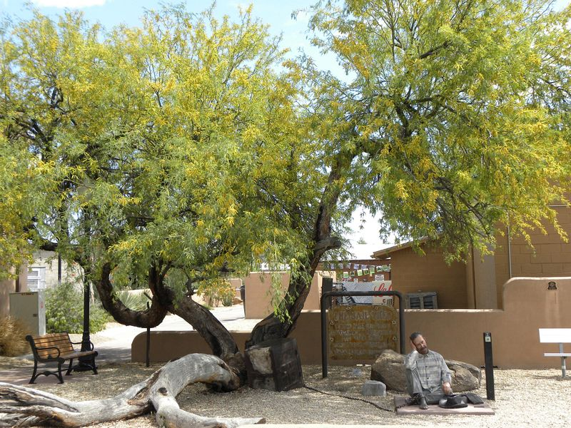 wickenburg-jail-tree-3