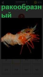 Изображение ракообразных видов животных. Они могут быть крабы, креветки или омары