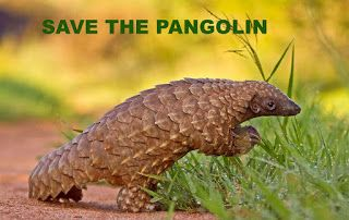 SAVE THE PANGOLIN!