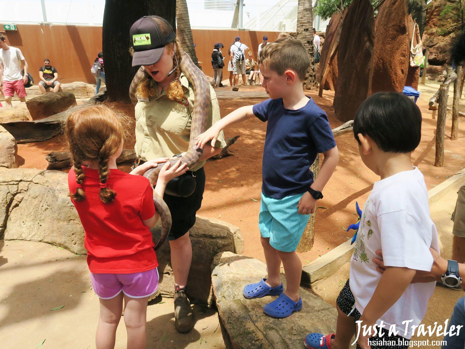 雪梨-景點-推薦-達令港-自由行-行程-旅遊-澳洲-雪梨野生動物園-WILD LIFE Sydney Zoo-Darling-Harbour-Tourist-Attraction-Travel