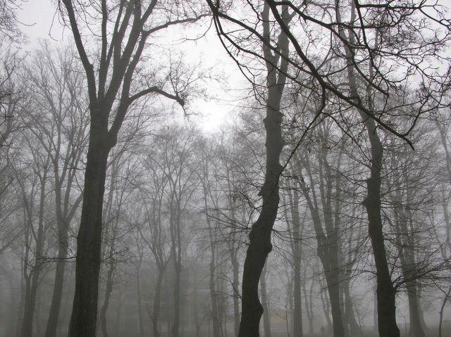park w Babimoście, drzewa, nastrój, gałęzie