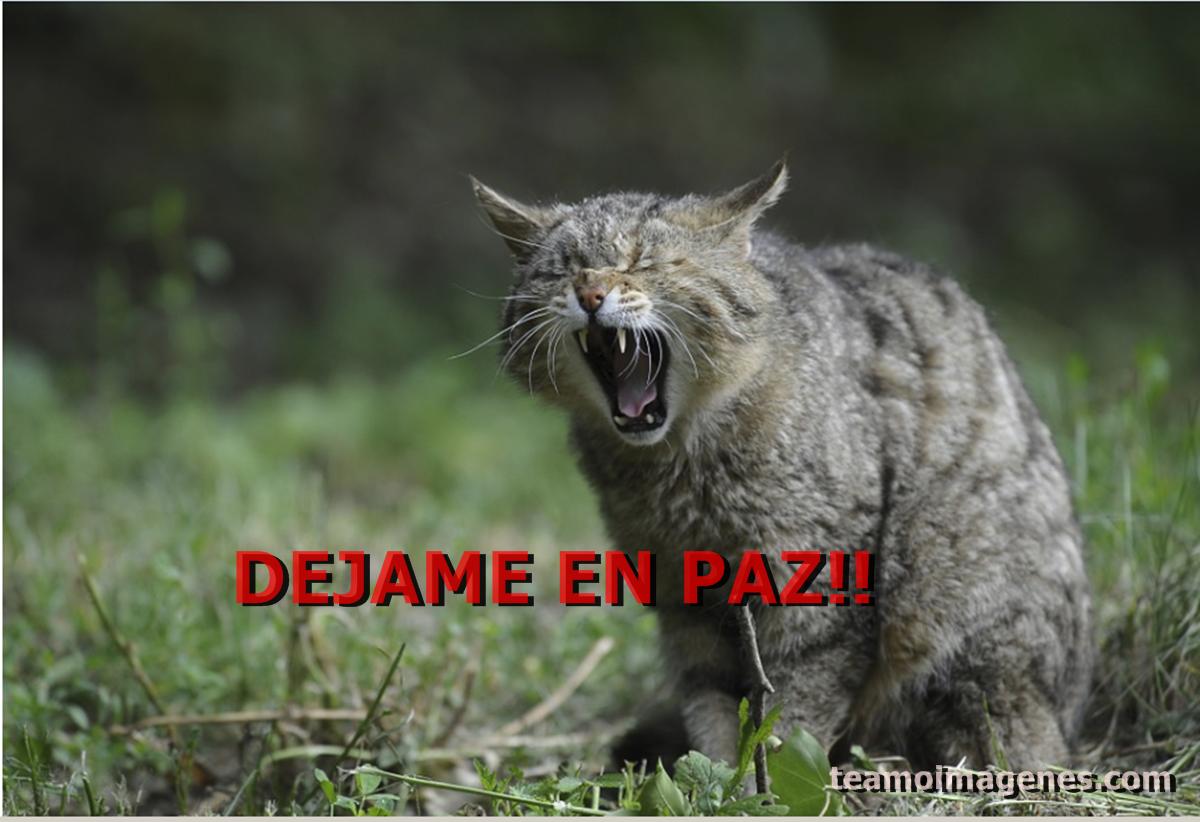 Las mejor Imagen de gato diciendo ya no te soporto, teamoimagenes.com