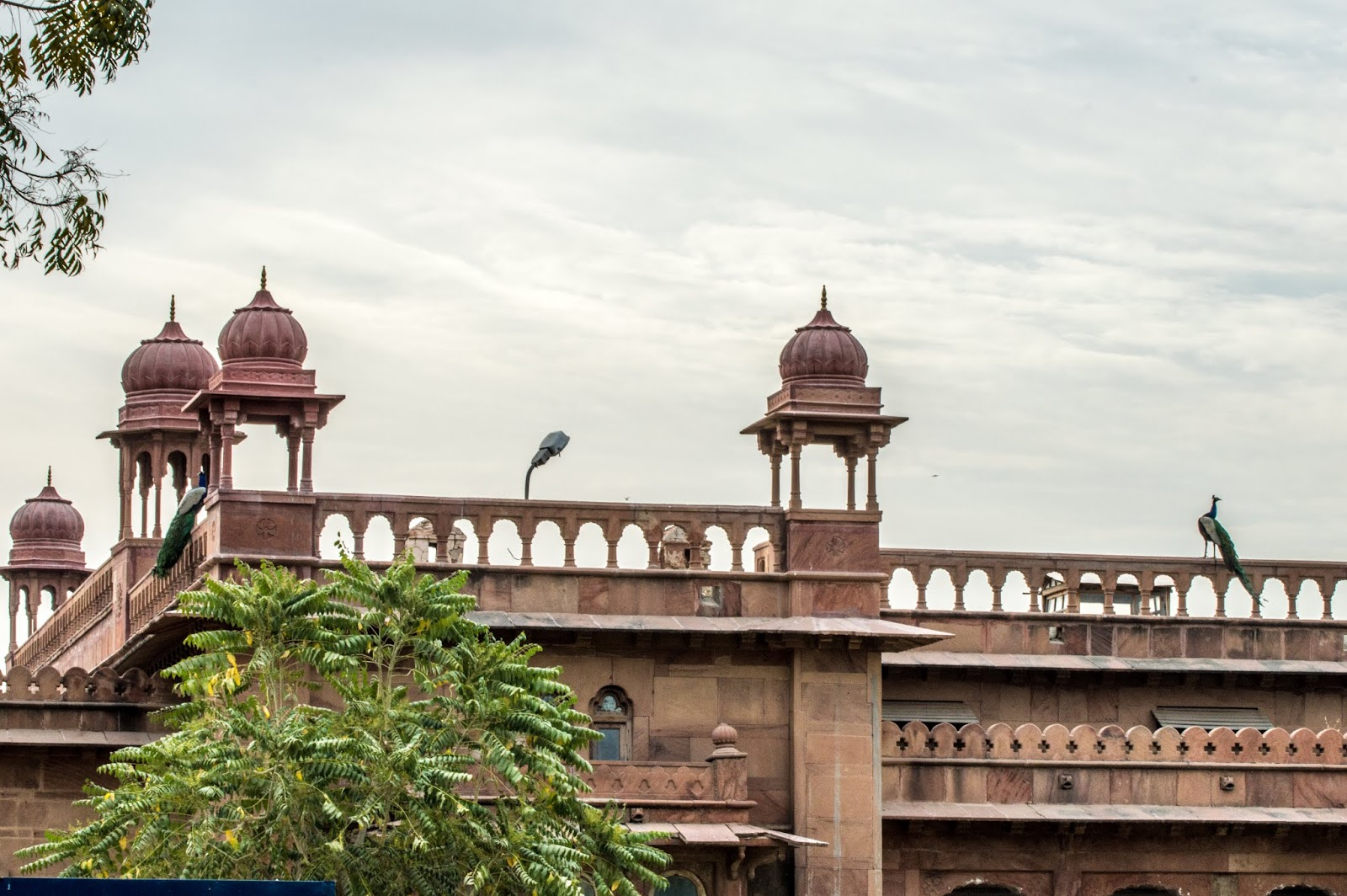 Peacocks on the Parapet  of the palace