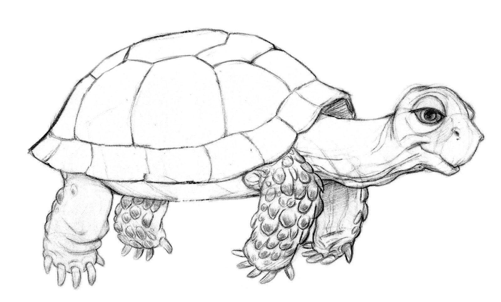 Let's Draw Endangered Species! : ): Uwe Heidschötter