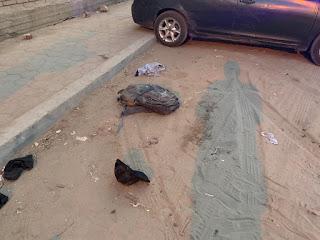 مقتل ضابط وشرطيين في إطلاق نار على سيارتهم بالقاهرة