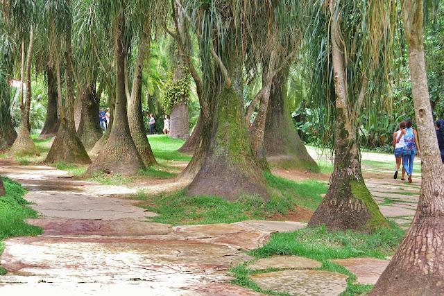 Pelos jardins de Inhotim