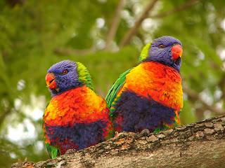 Penyebab Lovebird Nyilet Dan Kurus