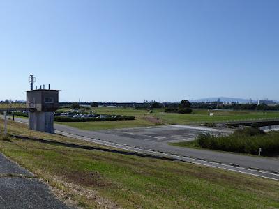 【大阪府寝屋川市】淀川河川公園・太間地区のコスモス