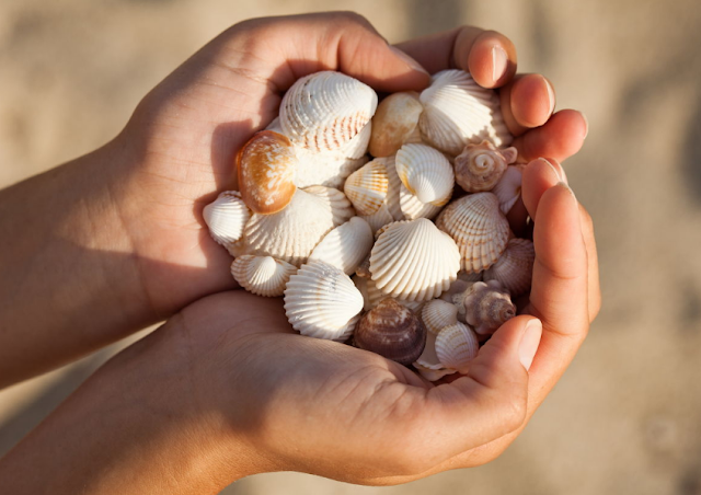 Things to Do in The Beach That Will Make You Fun (Part 1) - seashell