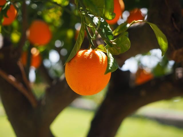 Agricultura concede más de 25 millones de euros en ayudas a la transformación y comercialización de productos agrícolas