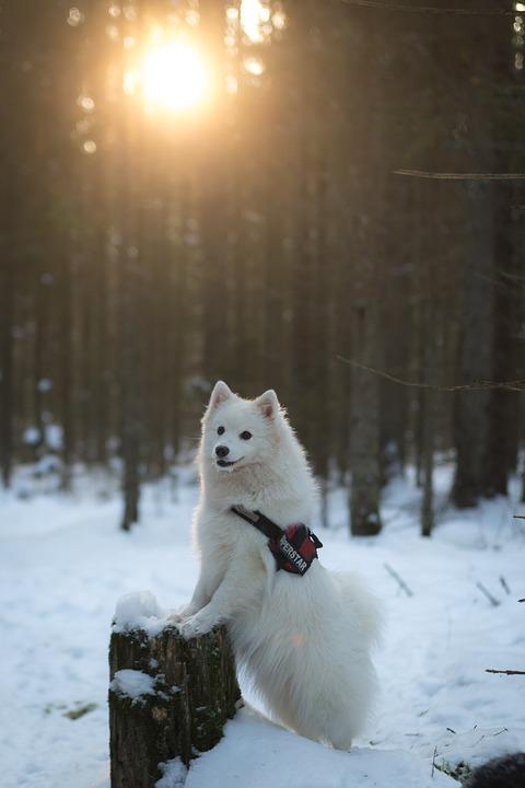 hình ảnh tuyệt đẹp của một chú chó