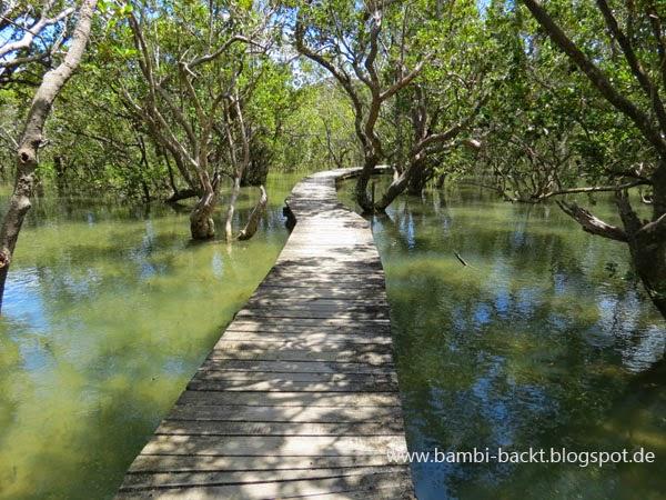 Mangrovenwald New Zealand North Island | Foodblog rehlein backt