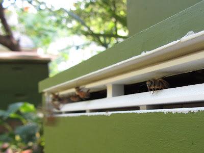 bee, beekeeping, beetlejail entrance trap, brushy mountain, pail feeder, Small Hive Beetle,