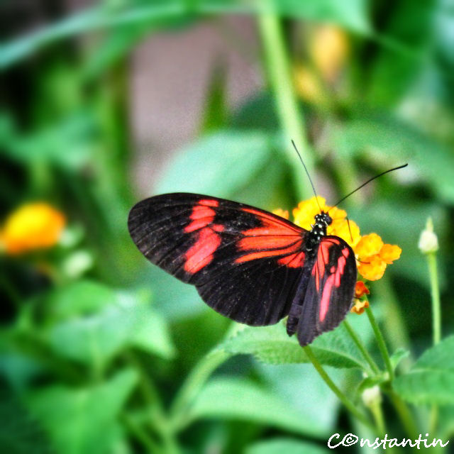 Butterfly House - Viena - blog FOTO-IDEEA
