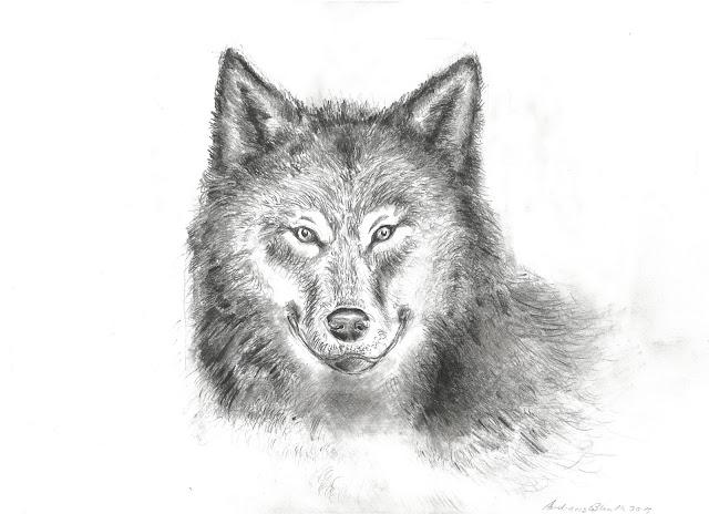 Wolfzeichnung