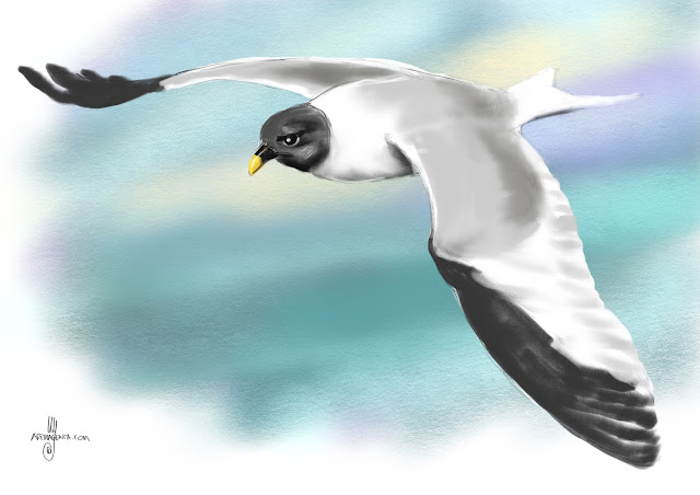Sabine's gull bird painting by Artmagenta