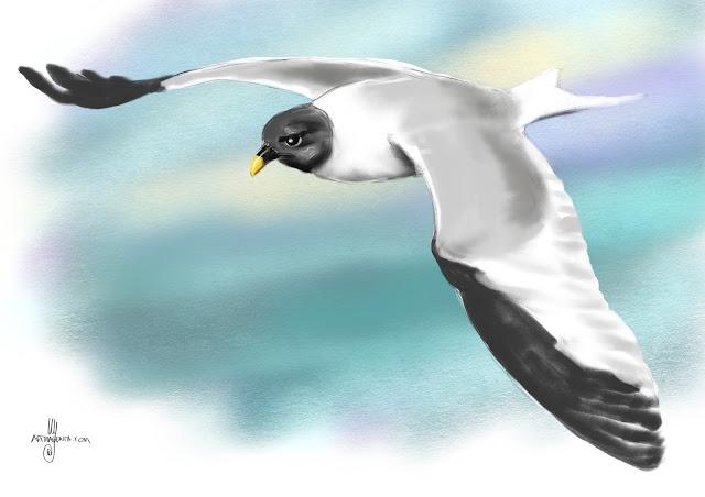 Sabine's gull bird painting by Artmagenta
