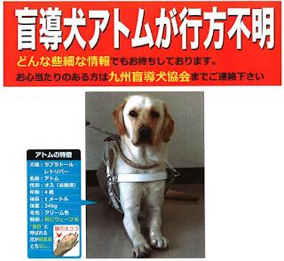 長崎 盲導犬 アトム号 失踪とある疑惑 誰のための犬生 ワスレサラレ