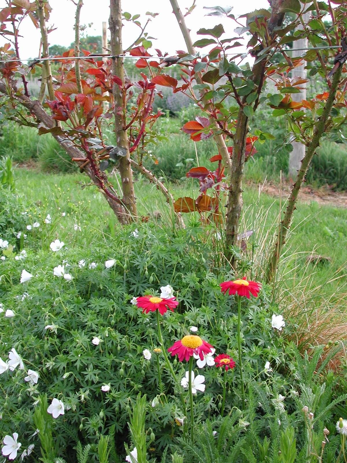 Quelle Plante En Pot Pour Terrasse terrasses et balcons : quelles plantes peut-on associer aux
