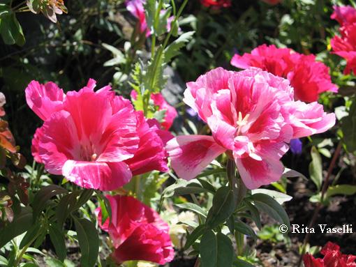 Rita vaselli watercolors dipingere fiori ad acquarello for Giardino fiori