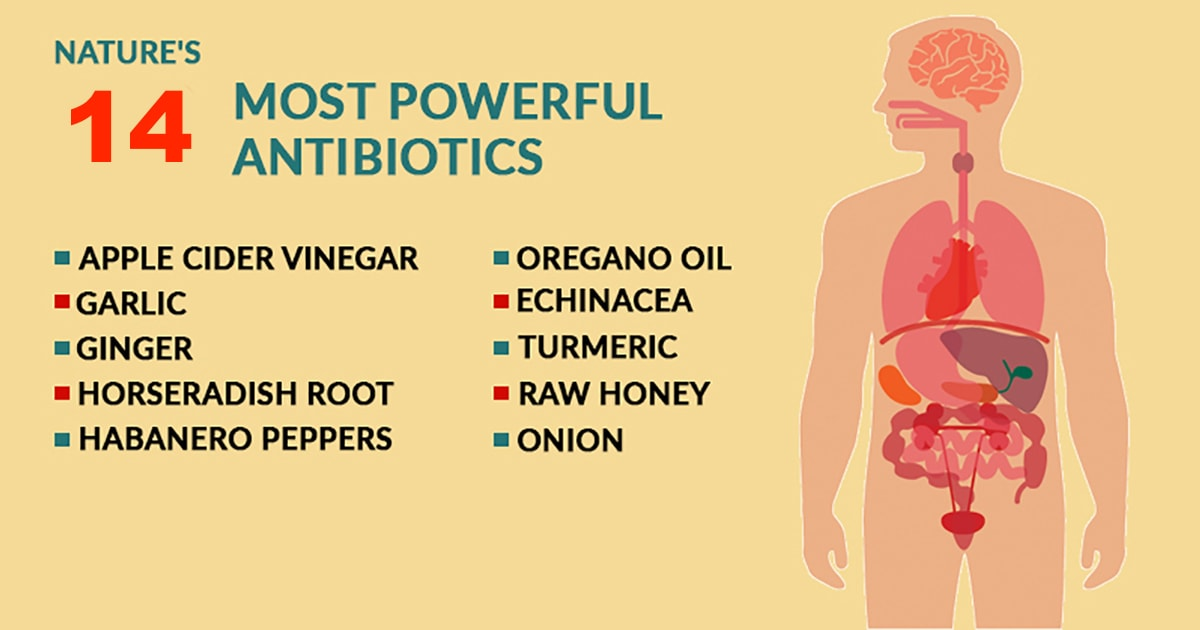 14 Of The Most Powerful Natural Antibiotics Known To Mankind