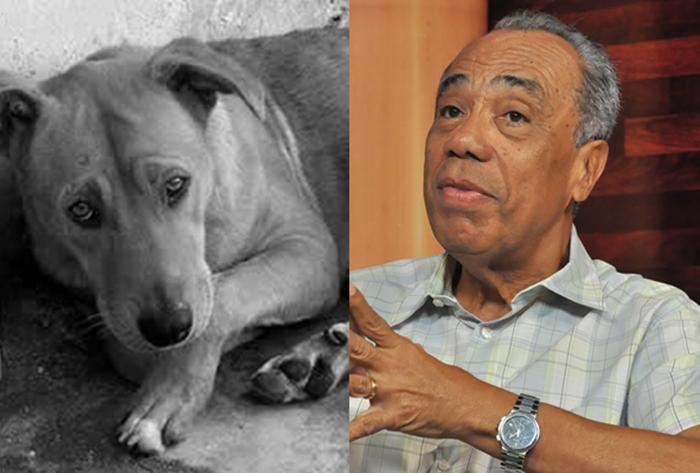 Resposta ao prefeito que vetou o projeto de castração de animais e sobre a nota dele; Compartilhe!