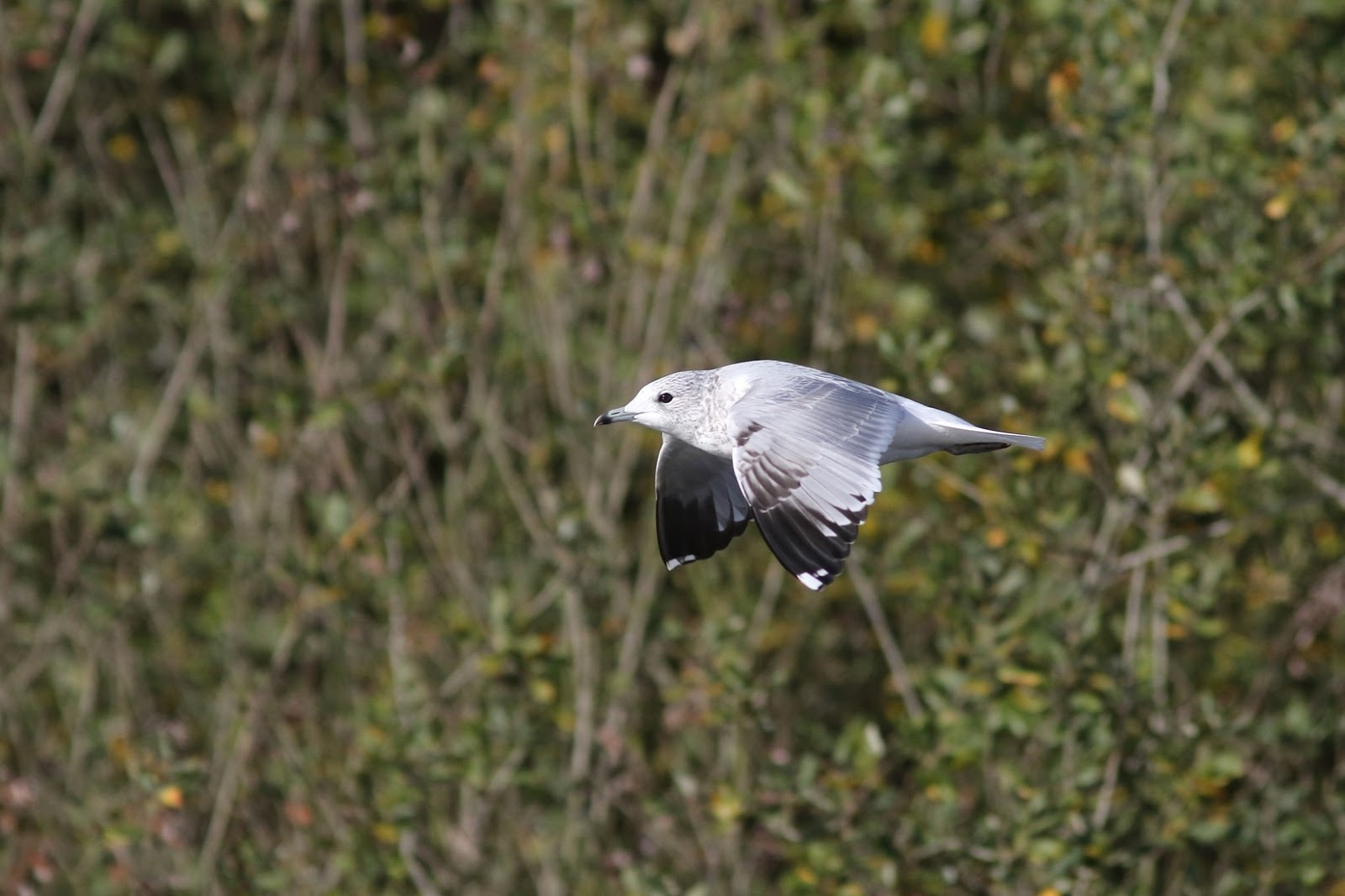 Wanstead Birding: Wrapping up