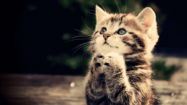 Cat Praying HD Wallpaper Photo Pics and Images