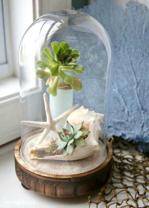 Glass Cloche with Succulents