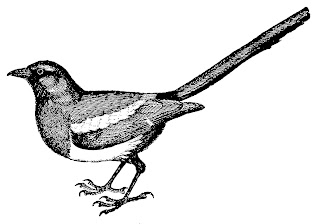 bird magpie illustration image transfer drawing artwork clipart