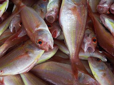 Cara membeli  dan membersihkan ikan segar