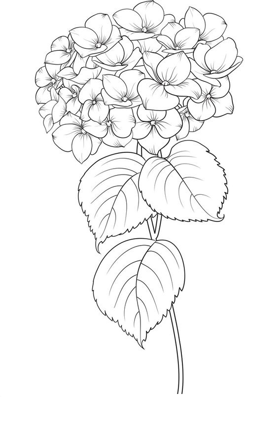 Tranh tô màu bông hoa cẩm tú cầu