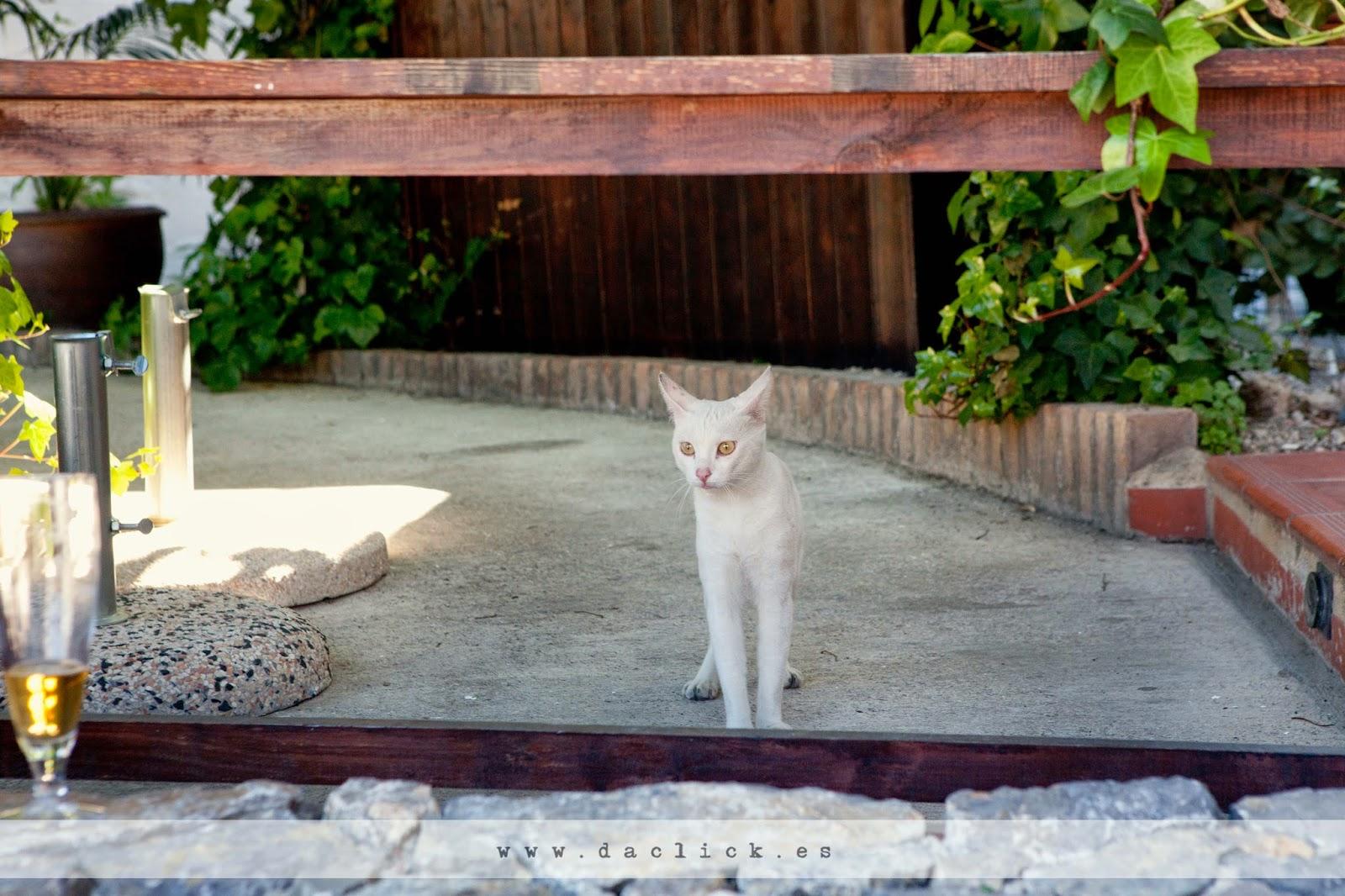 gato blanco observando la ceremonia de la boda