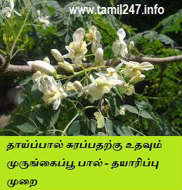 kulandhaikku thaai paal adhigam surakka murungai poo paal seivadhu eppadi, iyarkai unavu, paal adhigam surappdharkku, paal kodukkum thaimargal sappida vendiya unavu, food for feeding mothers, drumstick flower boost milk secretion, natural food for milk secretion for feeding mother to baby