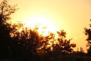 A glorious golden sunset