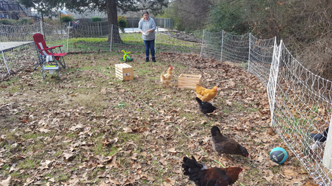 Chattanooga chickens - Dayton Tennessee