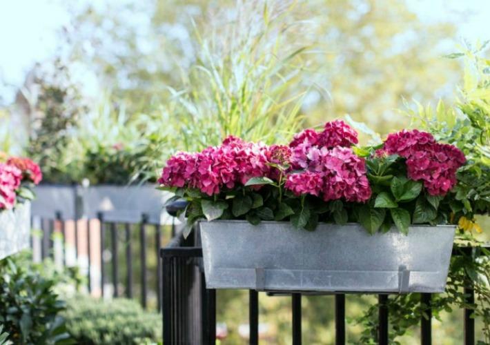 ya solo tienes que analizar las de tu balcn y elegir las plantas con flor que mas se adecuan a tu espacio exterior