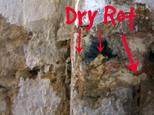Dry rot on brick wall