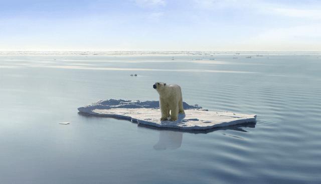 Environment: Rising Fears and Losing Hopes