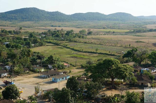 plantacja buraków cukrowych
