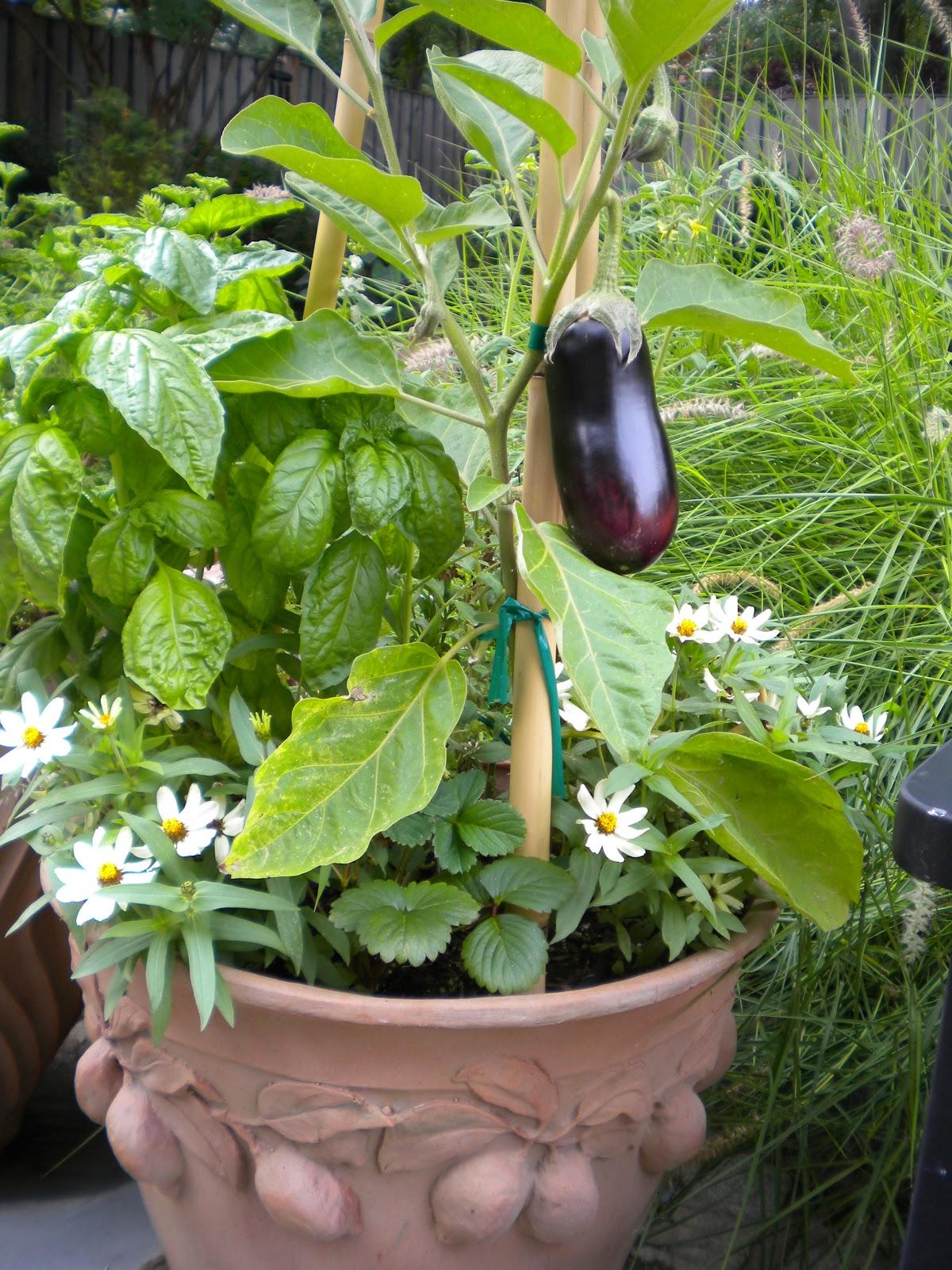 Design Kitchen Garden Ideas Tips In Pakistan India Pictures Urdu