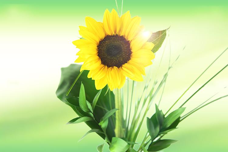 Kathys Checkpoint Sonnenblume von Rosenbotede