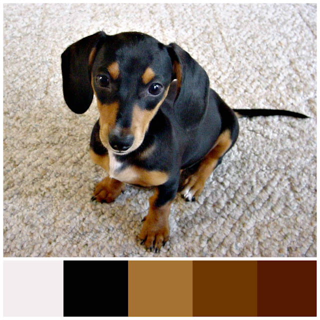 Sweetheart the Doxie color palette.