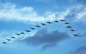 Voo dos pássaros